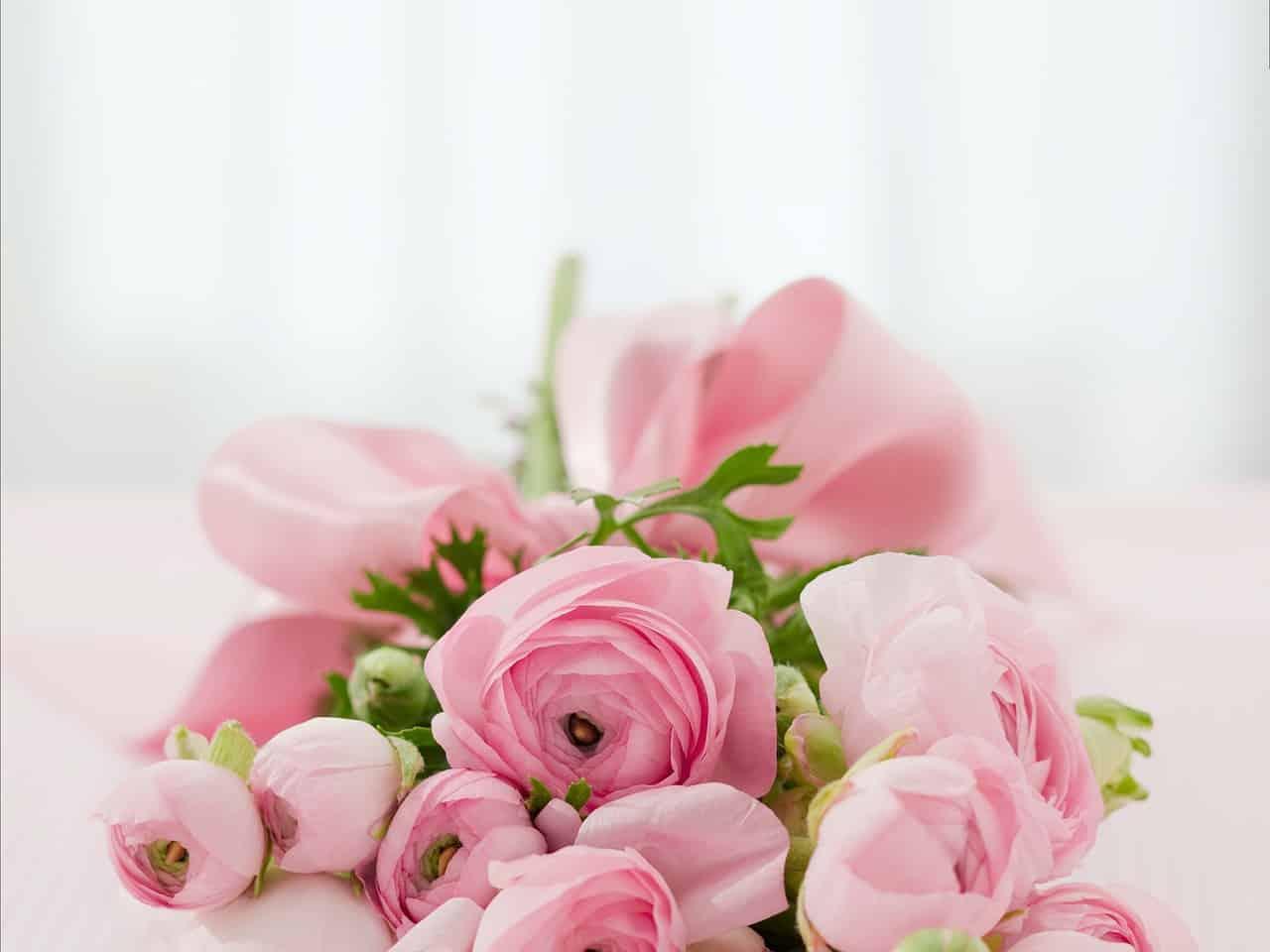 Fleurs Félicitations