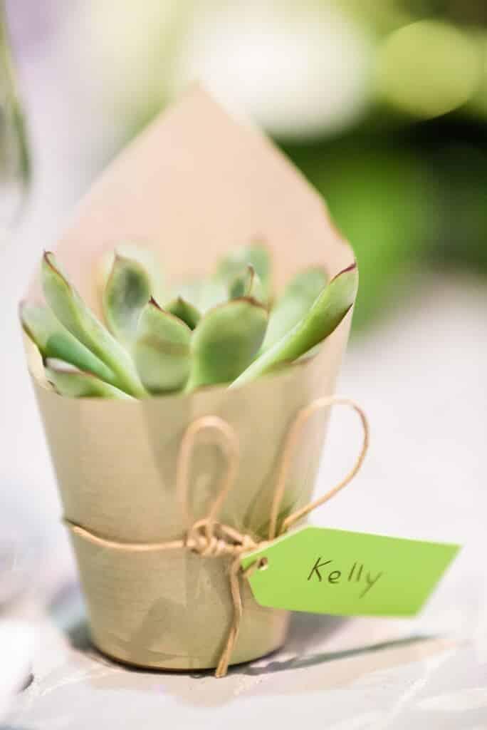 succulentes-cadeau-invites