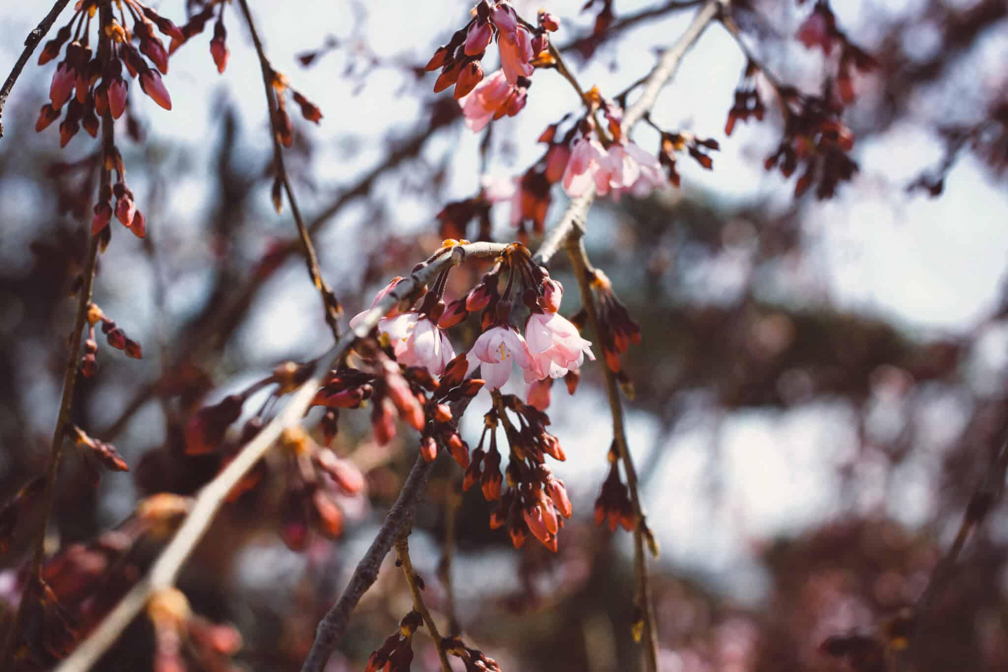 Lundi de pentec te ouverture exceptionnelle de votre fleuriste - Magasin ouvert lundi de pentecote ...