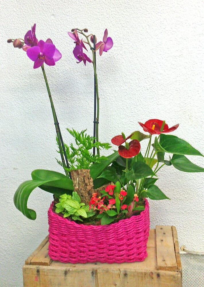 Composition plantes pour la fête des mères