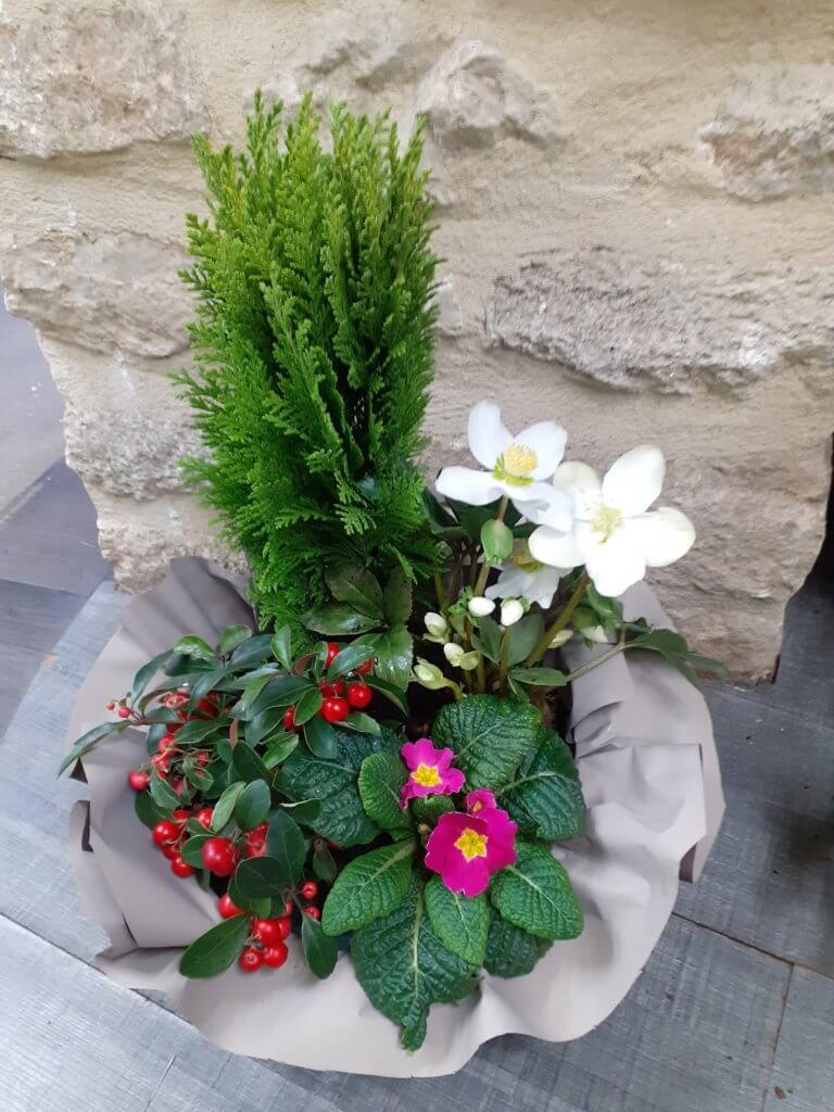 Plante à poser sur tombe
