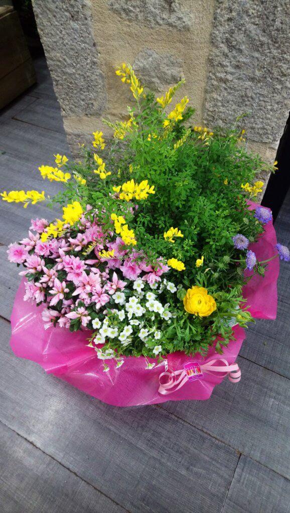 Composition de plantes pour cimetière